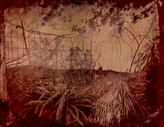 """Cemetery Fence"": 11' X 14"" red glass ambrotype made at Poplar Springs Cemetery in the Red Community near Bruce, Ms., (Calhoun County) in April of 2012."