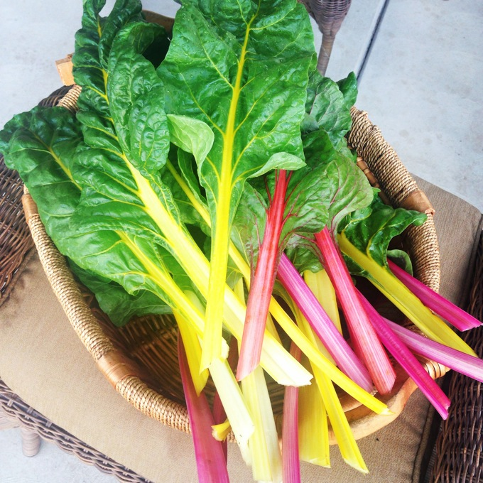 Freshly cut rainbow chard