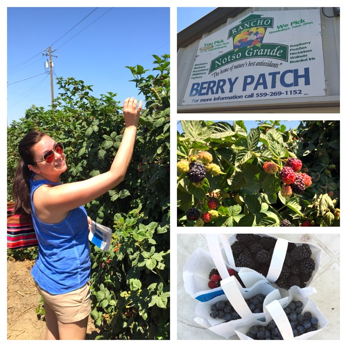 Berry Picking at Rancho Notso Grande