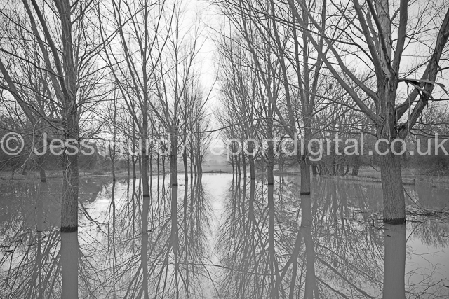 River Ouse flooding a wooded area in Bedford. Bedfordshire. © Jess Hurd/reportdigital.co.uk