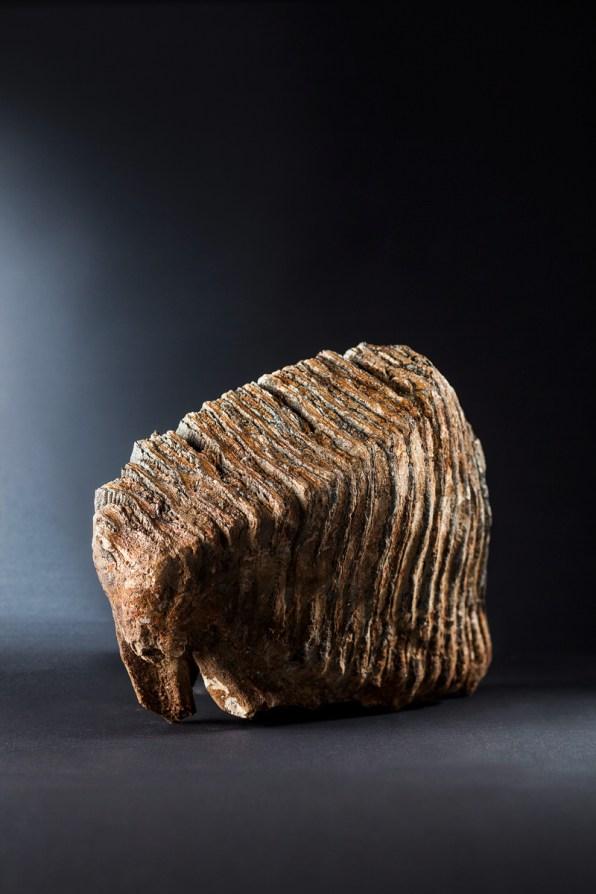 Steinzeit Mammutzahn Jessica Morfis