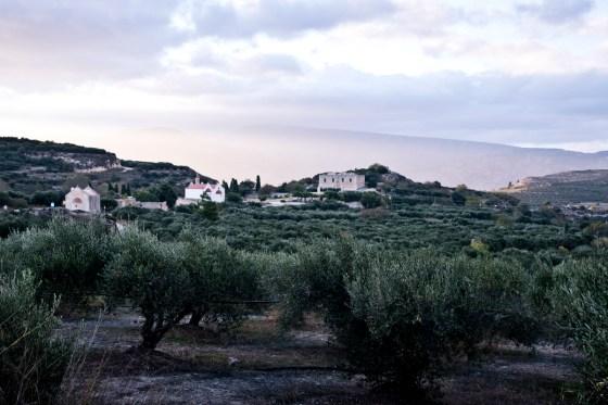 Olivenbäume bei Sonnenuntergang