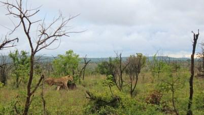 KrugerSAT14