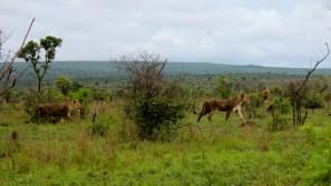 KrugerSAT15