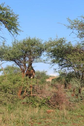 KrugerSAT44