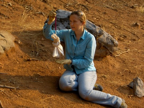 Jessica weighing a California ground squirrel (Spermophilus beecheyi).
