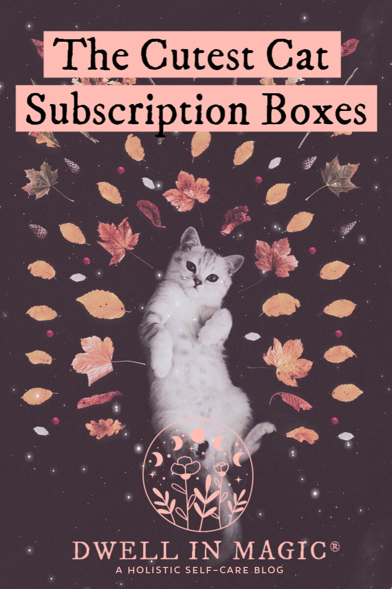 The cutest (and best) cat subscription box