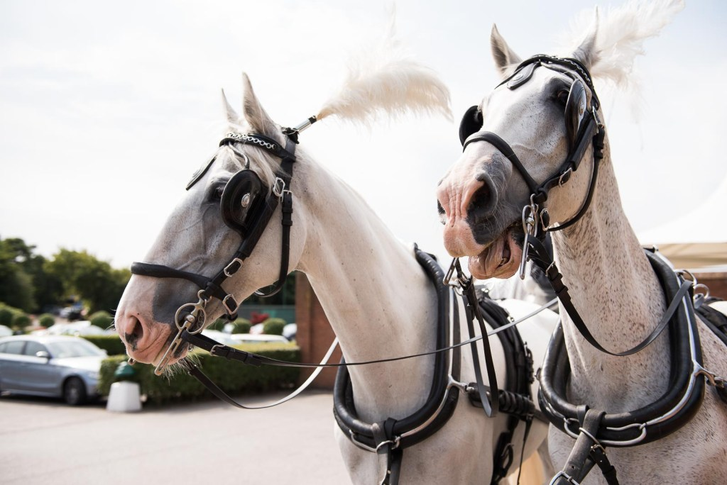 Horse drawn carriage at Essex wedding © Jessica Grace Photography