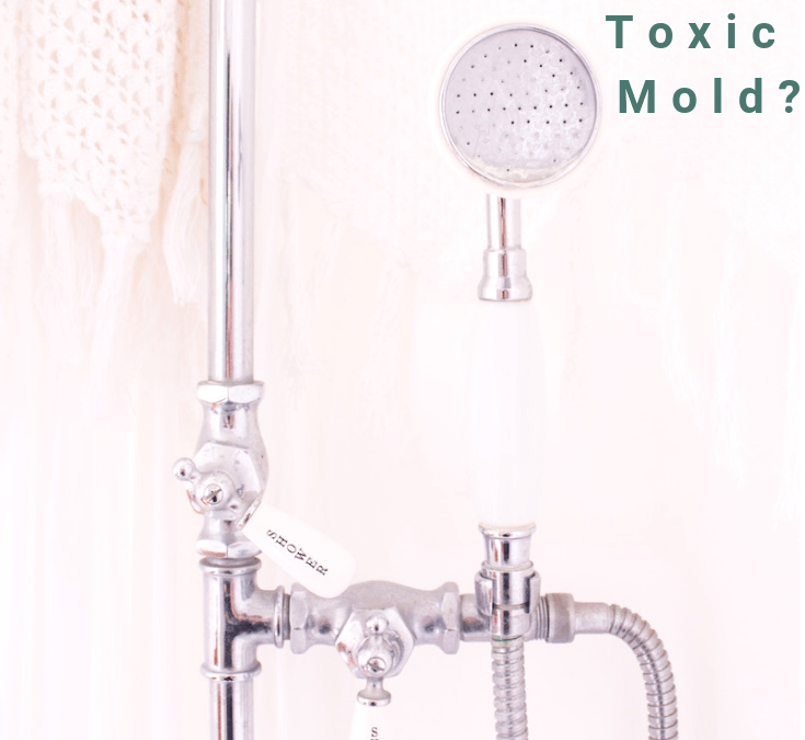 Are You Suffering From Toxic Mold?