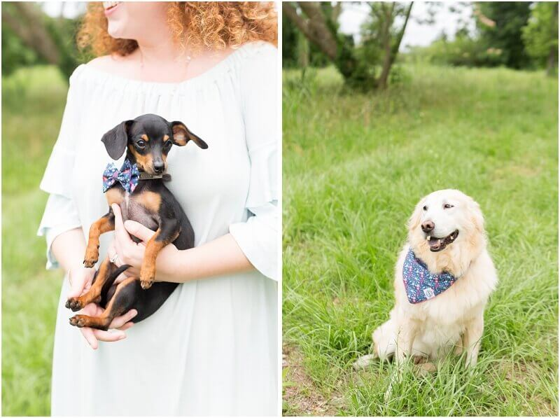 adorable dog ring bearer with bowtie and bandana