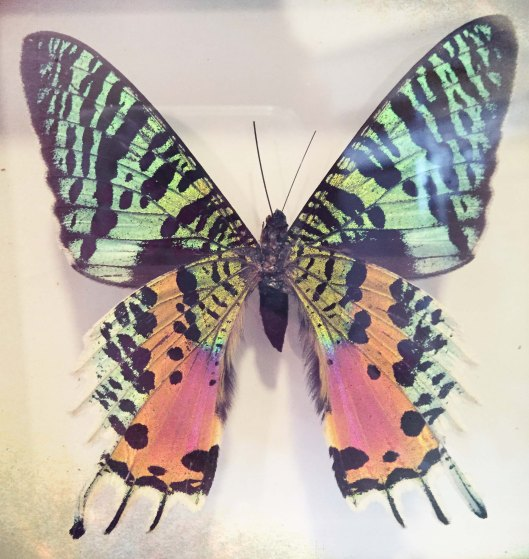 butterly (1 of 1)