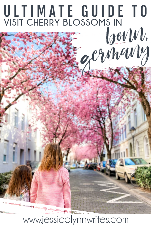 Everything you need to know about visiting heerstraße, aka: the famous cherry blossom street in Bonn, Germany.