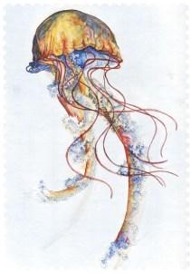 """Rainbow Jellyfish"", watercolours on B4 sized card, Jessica McLeod-Yu, 2013"