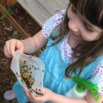 adding ladybugs to the garden