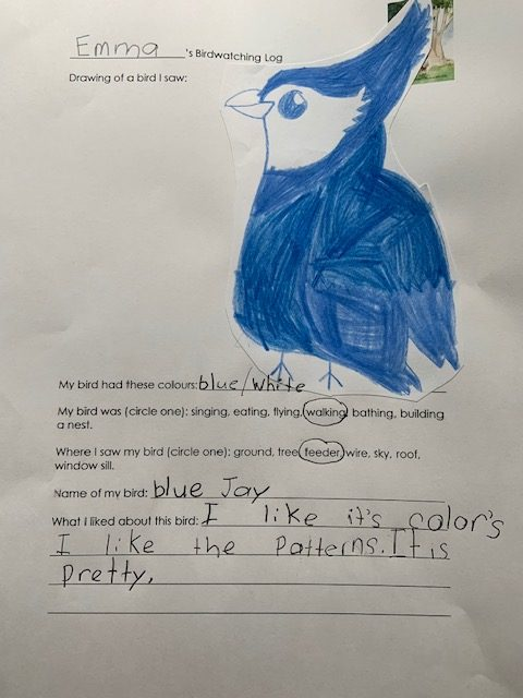 Child's drawing of a bluejay