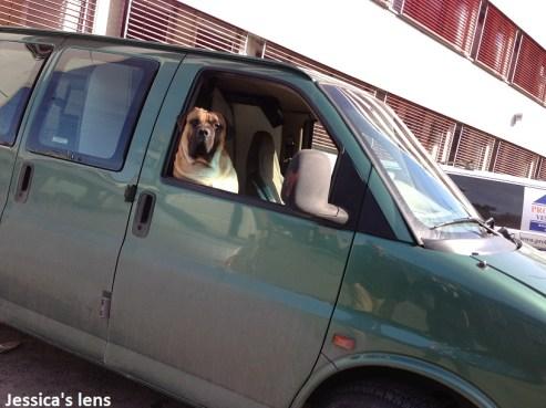Passing a waiting dog at Holmestrand