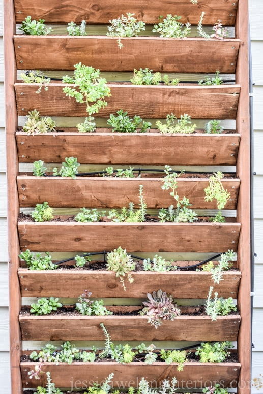 image of wood vertical garden with sedum and succulents