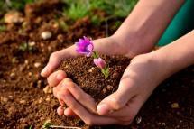 handful-of-soil