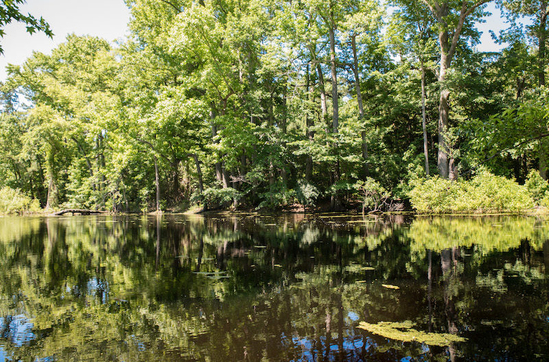 eastern shore getaways curtis pond in Savage Neck Dunes Natural Area Preserve