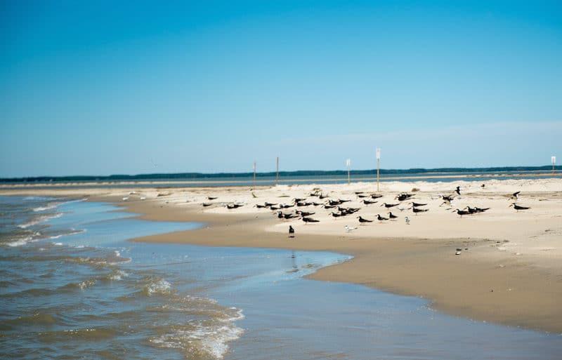 eastern shore getaways virginia's barrier islands