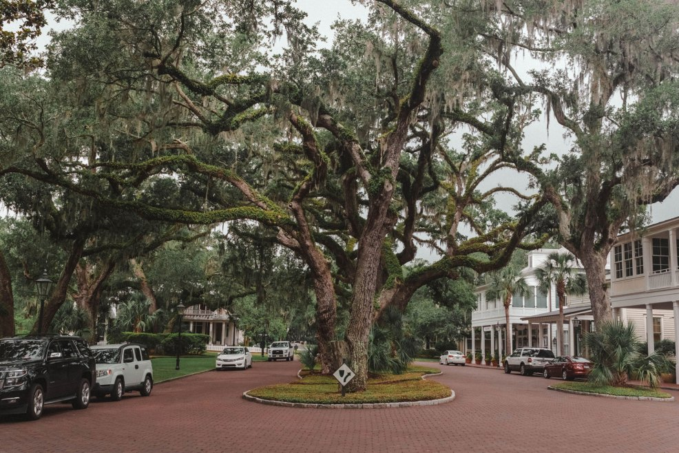 Spanish moss covered oak trees line the streets of the Montage Palmetto Bluff