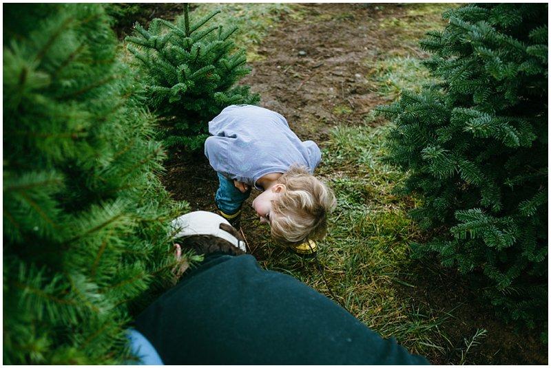 Tacoma Lifestyle Christmas Tree farm photos