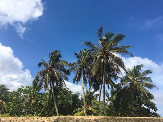 Sri Lanka: Old Dutch Fort in Galle trees