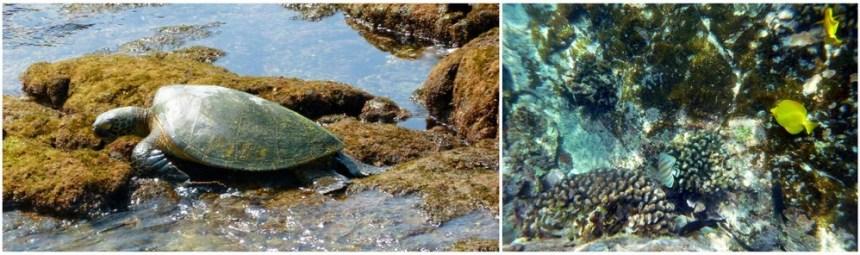 vie marine two steps