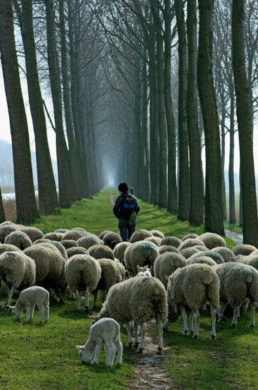 Shepherd-and-sheep-2