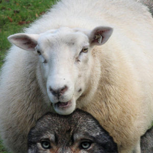 Discerning Wolves in Sheep Clothing