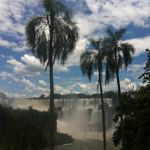 Iguazu with palms