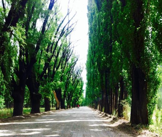 Uspallata greenery