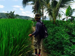 hiking through ricefields Munduk Bali