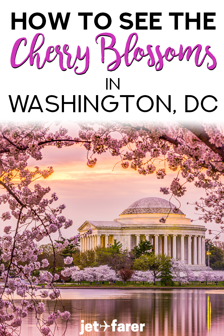 The cherry blossoms in Washington, DC are one of the highlights of traveling to the city in the spring. However, it can be hard to avoid the crowds and get the best views of the cherry blossom trees with the monuments nearby. We created a guide to show you the best ways and places to see the cherry blossoms in DC! Click through to read the complete guide, including travel tips on where to stay and things to do in Washington DC as well. #USA #Travel #WashingtonDC
