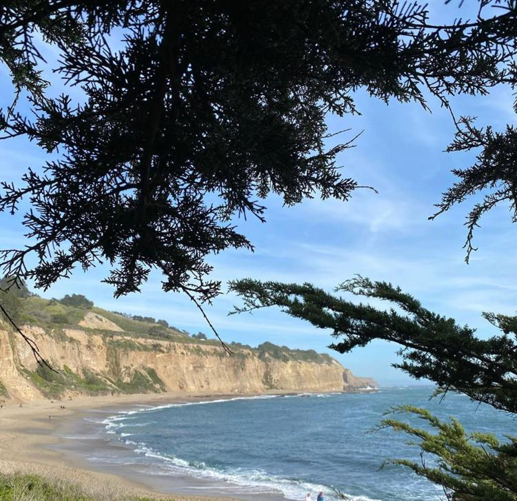 Beach with white sand cliffs and tree in the foreground. Monterey Bay, California along the Pacific Coast Highway.