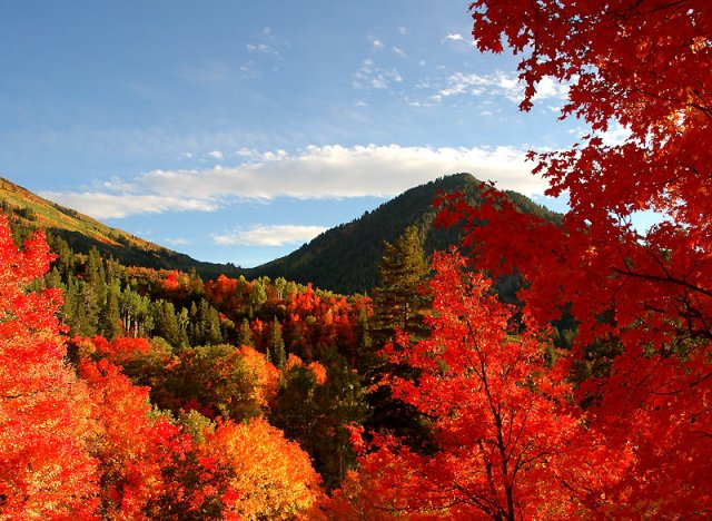 Red fall trees with green mountains in the background.