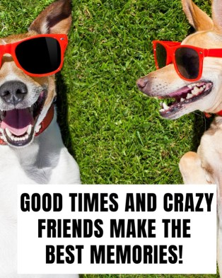 """A picture of two dogs wearing sunglasses with a good friend quote that says """"good times and crazy friends make the best memories."""""""