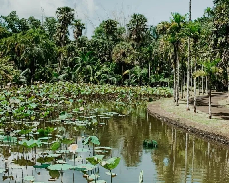 pond at the botanical garden in Mauritius