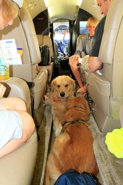 Pet's on a Charter Flight