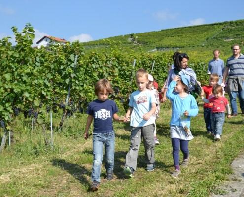 Promenade de la Fée de la vigne
