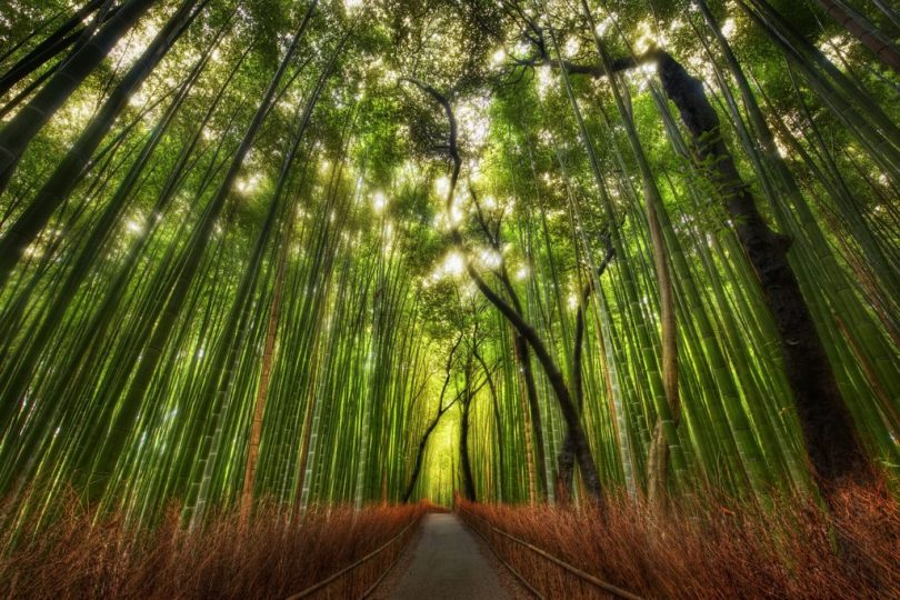 Bamboo Forest Japan PHOTO CREDIT: Earthprom