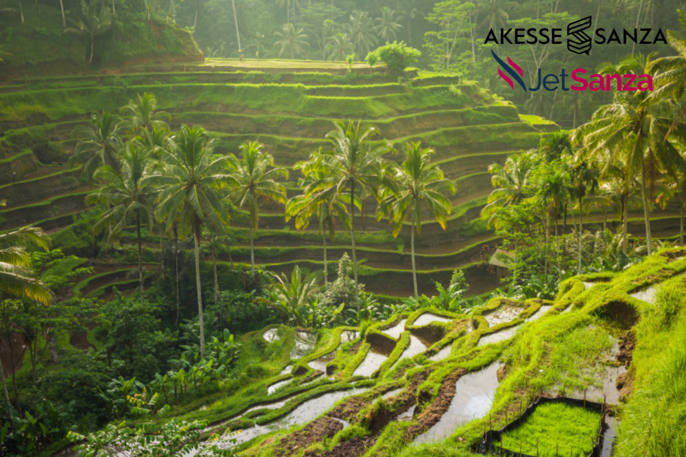 beautiful sunrise over the green rice terraces, ubud-bali, Indonesia