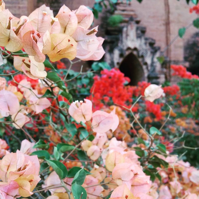 Myanmar week on Instagram, jet set chick 2