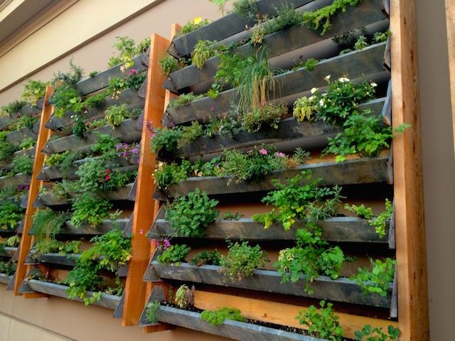 CUCINA enoteca Newport Beach outside herb wall