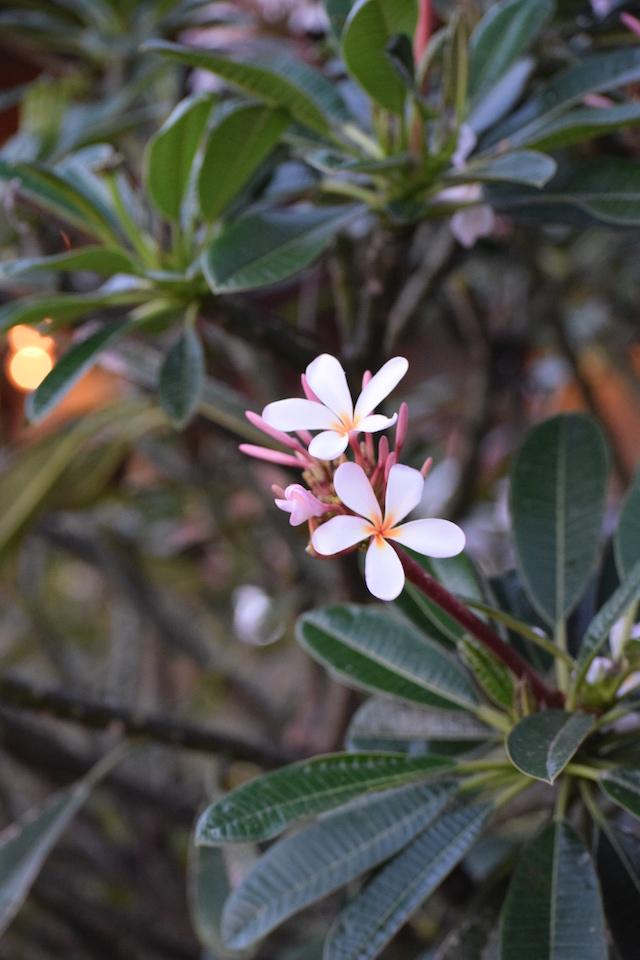 Disney Aulani flower
