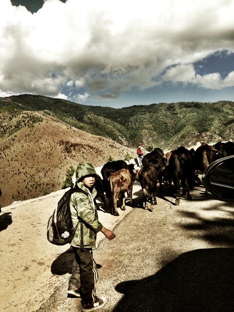 Bhutanese children herding cattles