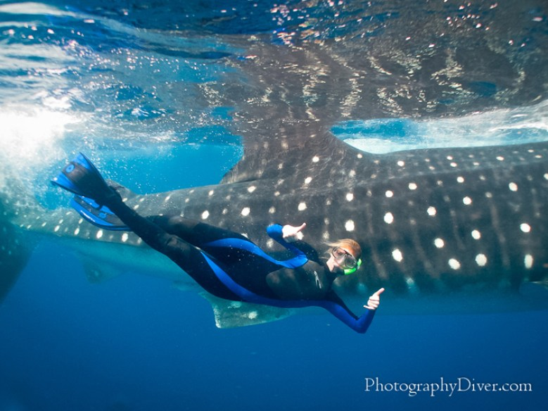 Cancun Whale Shark Tour 3