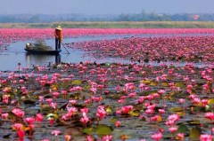 Kerala in India takes you very far away from the bustling cities like New Delhi and Mumbai. Enjoy the beaches, the sunsets and an abundance of lotuses, and take in your quiet moments.
