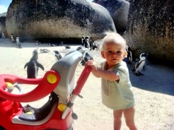 Cape Town's beaches are also kid-friendly (penguins love to hang out too)!