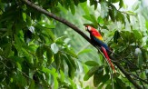 Costa Rica: Discover three distinct rain forest regions while rafting the white water of the Pacuare River, hiking the base of Arenal Volcano and exploring the Osa Peninsula with local naturalists. Delve into the traditions of the indigenous Cabécar people, and discover the incredible biodiversity of the jungle canopy close up. (Photo credit: National Geographic)